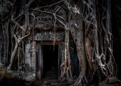 Tempio Ta Phrom, Siem Reap, Cambogia