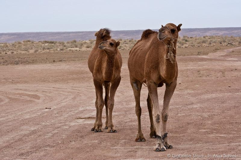 Kyzylkum desert © Gabriele Stoia
